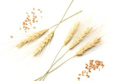 spikelets of wheat isolated on white background. top view Royalty Free Stock Photography