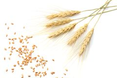 spikelets of wheat isolated on white background. top view Stock Photos