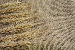 Spikelets of wheat on linen fabric, background from ,canvas Stock Image