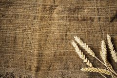 Spikelets of wheat on sackcloth background. A spikelets of wheat on sackcloth background Royalty Free Stock Image