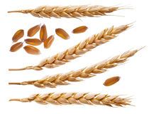 Spikelets and wheat seeds isolated on white Stock Photos