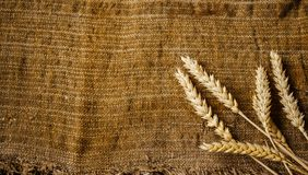 Spikelets of wheat. A spikelets of wheat on sackcloth background Stock Photos