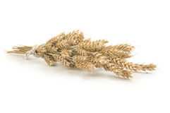 Spikelets of wheat stacked in sheaf on a white Royalty Free Stock Image