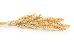 Spikelets of wheat stacked in sheaf on a white background Stock Photo