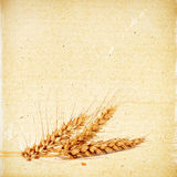 Spikelets of wheat on the vintage textured paper background Stock Image