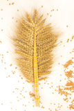 Spikelets of wheat woven together Royalty Free Stock Photos