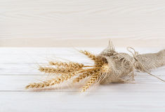 Spikelets of wheat wrapped in burlap Stock Photos