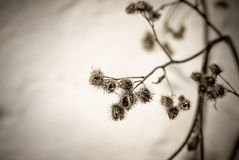 Spikes on a background of snow. On a spring morning Royalty Free Stock Image
