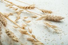 Spikes of organic oats and wheat on a white table stock photography