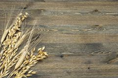 Spikes of ripe, mature wheat and barley in the lower left corner of the image on a background of wood. Spikes of ripe, mature wheat and barley in the lower left Stock Photos