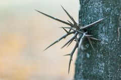 Spikes on the tree. Fall, forest Royalty Free Stock Photo