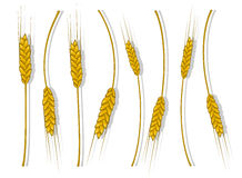 Spikes of wheat, barley or rye are woven into one bundle Stock Photos