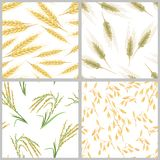 Spikes of wheat, oats, rice and rye. Set of grain ears seamless patterns. vector illustration