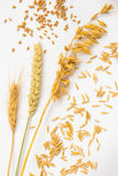 Spikes of wheat and wheat grain. Ears of oats and oat grains Stock Photos