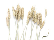 Spikes of wheat. Royalty Free Stock Photos