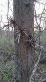 Spikey树 库存照片