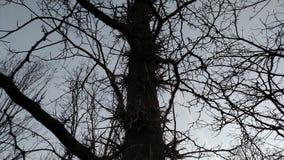 Spikey树 免版税库存照片