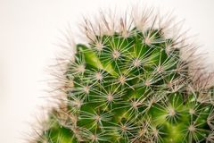 Spikey cactus macro shot. Close up of a spikey cactus plant Royalty Free Stock Photo