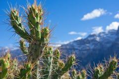Spikey kaktus fotografia stock