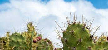 Spikey kaktus och moln Arkivfoto