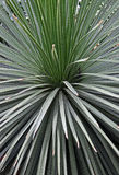 Spikey leafed green plant Stock Photography