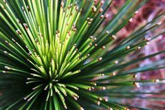 Spikey plant. Looking down on Royalty Free Stock Photos