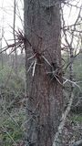 Spikey träd Arkivfoto