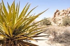 Spiky зеленое растение растя в ландшафте пустыни Стоковые Изображения RF