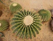 Spiky кактусы в геодезическом куполе в парке Ram IX Suan Luang Phra Стоковые Фотографии RF