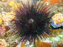 spiky твари морское стоковое изображение rf