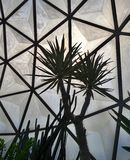 Spiky cacti  in geodesic dome in Suan Luang Phra Ram IX Park Stock Image