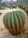 Spiky cacti  in geodesic dome in Suan Luang Phra Ram IX Park Royalty Free Stock Photos
