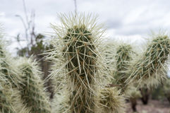 Spiky Cactus Stock Photography