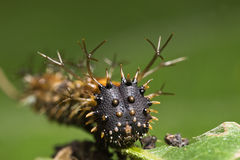 Spiky caterpillar face Stock Photo