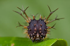 Spiky caterpillar portrait Royalty Free Stock Photo