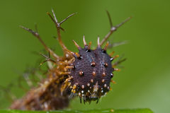 Spiky caterpillar portrait Stock Image