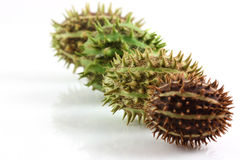 Spiky cucumis fruit mix. On white background royalty free stock photography
