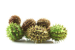 Spiky cucumis fruit mix Royalty Free Stock Image