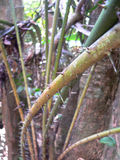 Spiky dżungli roślina obrazy royalty free