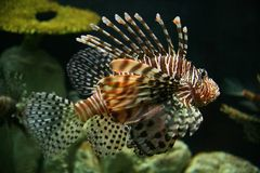 Spiky fish stock photography