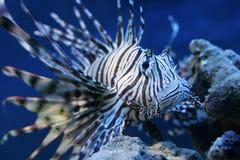 spiky fisk arkivbild