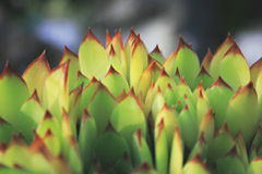 Spiky green leaves Royalty Free Stock Images