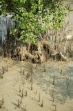 spiky jordning Royaltyfria Foton
