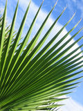 Spiky leaves. Against the sky royalty free stock photos