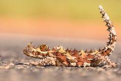 Spiky lizzard Стоковые Фото