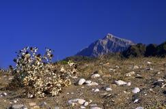 Spiky plant in desert. Spiky bush with flowers in desert hill Royalty Free Stock Photo