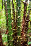 Spiky plant in rainforest Stock Photography