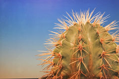 Spiky plant on the window. Popular tropical houseplant - a cactus royalty free stock photo