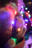 Spiky cactus decorated with Christmas lights. Spiky potted cacti decorated with colourful Christmas fairy lights royalty free stock photos