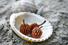 Spiky Seed on seashell Stock Photography